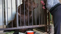 Cage with bear which takes fodder from woman hands Stock Footage