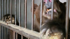Muzzle and claws of huge bear behind lattice in cage Stock Footage