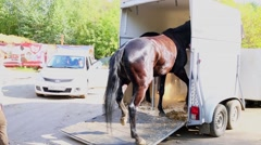 Woman leads horse out of truck at autumn sunny day Stock Footage