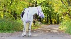 White horse with saddle walks by park alley at autumn day Stock Footage