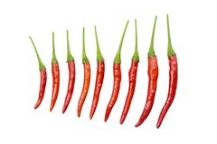 Red chili cayenne with green stick vary size - stock photo