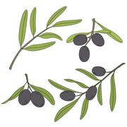 The branch of the olive tree with olives. Stock Illustration