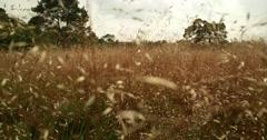 Panning shot through blooming grass Stock Footage