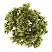 top view of white ash tree isolated on white background. 3d illustration - stock illustration