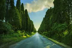 Bolgheri famous cypresses trees straight boulevard on backlight sunset landsc Stock Photos