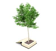 Tree growing from the old book, Knowledge growth from education concept - stock illustration