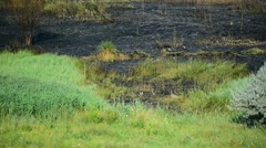 Summer day scene with an extinguished wildfire on a meadow Stock Footage