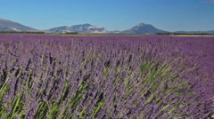view of lavender field in France Stock Footage