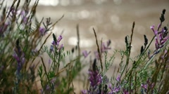 Wildflowers on a background of the river Stock Footage