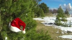 Santa Claus Hat on pine tree - stock footage