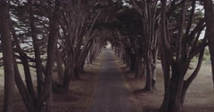 Aerial in cypress tree tunnel california Stock Footage