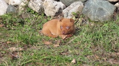 Cute little pupy playing outdoor at sunny morning Stock Footage