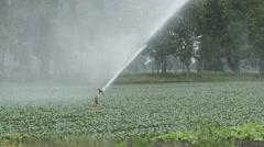 Sprinkler irrigates crops. Beaverton, Ontario, Canada. Stock Footage