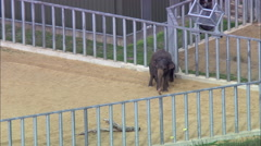 Whipsnade Zoo Stock Footage