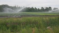 Sprinklers irrigate crops. Beaverton, Ontario, Canada. Stock Footage
