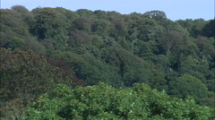 Tyntesfield House With Reveal From Behind Trees Stock Footage