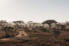 Trees and dirt road in tranquil sunny desert, Serengeti, Tanzania - stock photo