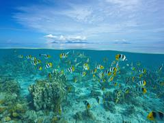 Island with shoal of fish and shark underwater - stock photo