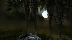 Oil Palm Tree Plantation against beautiful lens bokeh Stock Footage