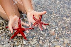 Young child, holding red starfishes in his hands on the beach - stock photo