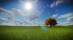 Solitary tree on green meadow, timelapse clouds Stock Footage