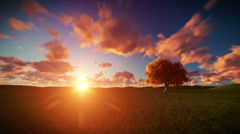 Solitary tree on green meadow, timelapse sunrise Stock Footage