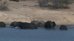 African Elephant playing in water Stock Footage