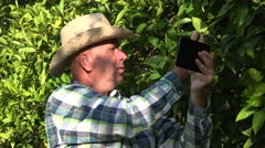 Farmland manager search best oranges market prices using tablet web connection. Stock Footage
