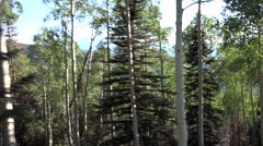 4K Drive By Variety Of Trees In Thick Forest Stock Footage