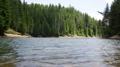 Lake with pine trees. Windy Stock Footage