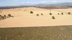 Aerial view of lavender field in Plateau de Valensole, South France Stock Footage