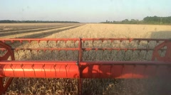 Combine treshing wheat cutterbars view Stock Footage