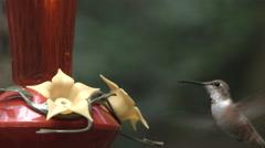 Hummingbird Close Up Stock Footage
