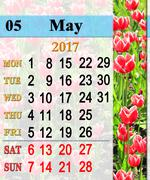 Calendar for May 2017 with tulips on the flower-bed Stock Illustration