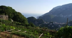 Vineyard on Ravello of Amalfi Coast, Italy Stock Footage