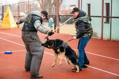 German shepherd dog training in Gomel Regional sports club and d Stock Photos