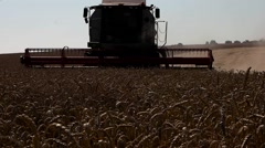 Harvester treshing wheat field view Stock Footage