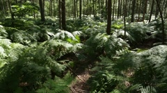 Tall pine trees in the deep forest in England Stock Footage