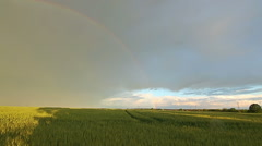 Rainbow above wheat field in farmland in rural countryside Stock Footage