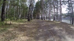 Old road in a pine forest. Siberia. Khakassia. Stock Footage