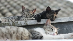 Cute family cats portrait awakened Stock Footage
