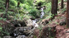 Creek in Forest Flowing Down From Mountainside  Stock Footage