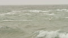 Lonely swan in choppy rough sea with yellow rocks, dense gray sky. - stock footage