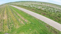 Countryside road between vineyard and orchard, aerial view Stock Footage