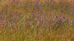 Grass nature background Stock Footage