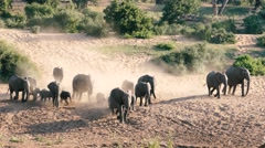Elephant herd running Stock Footage