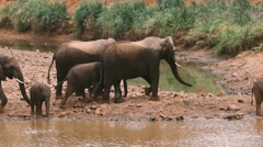 elephant family waterhole - stock footage