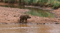 Baby elephant running at waterhole Stock Footage