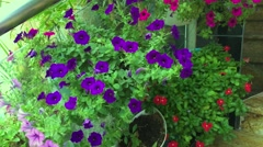 Decorative flowers wall Stock Footage