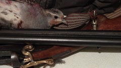 A wounded bird hunting Stock Footage